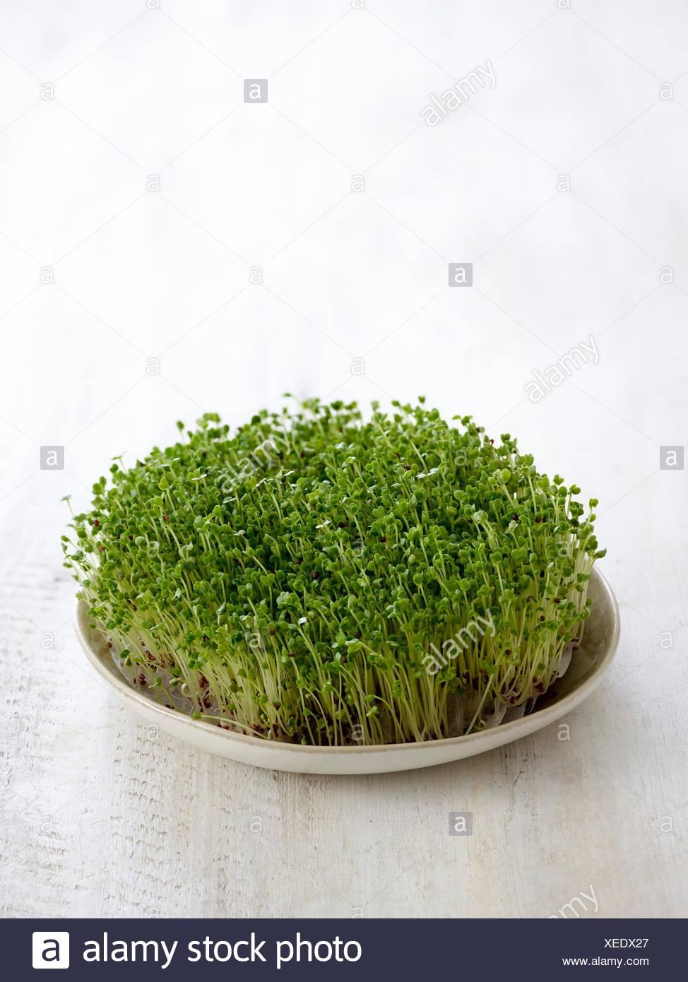 Broccoletti in un piatto da portata. Immagini Stock