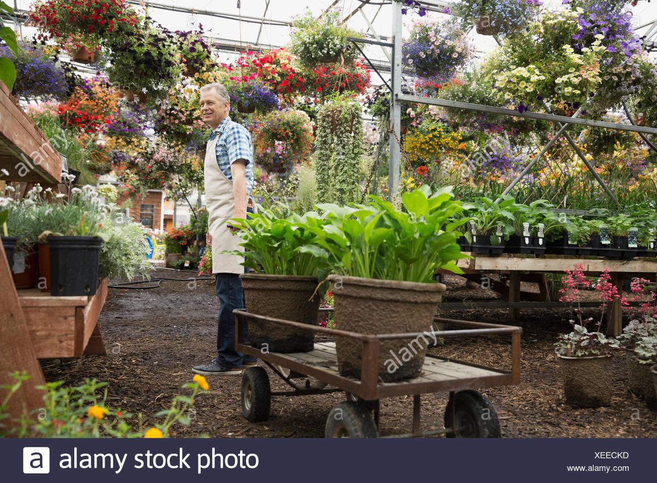 Lavoratore nel vivaio di piante in serra Immagini Stock
