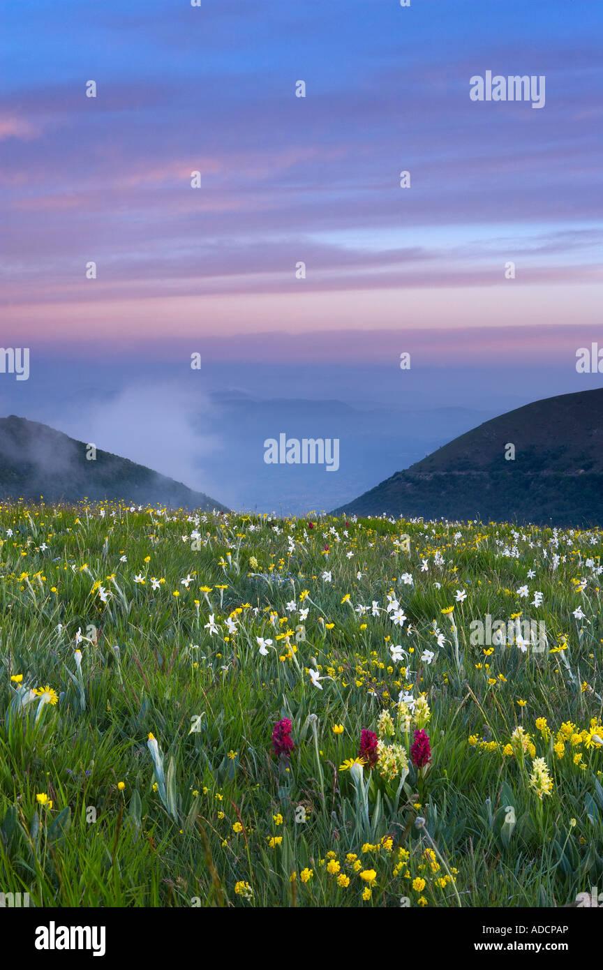 Flores selvagens crescendo no Canapine Defeito no Parque Nacional de Monti Sibillini Umbria Itália NR Imagens de Stock