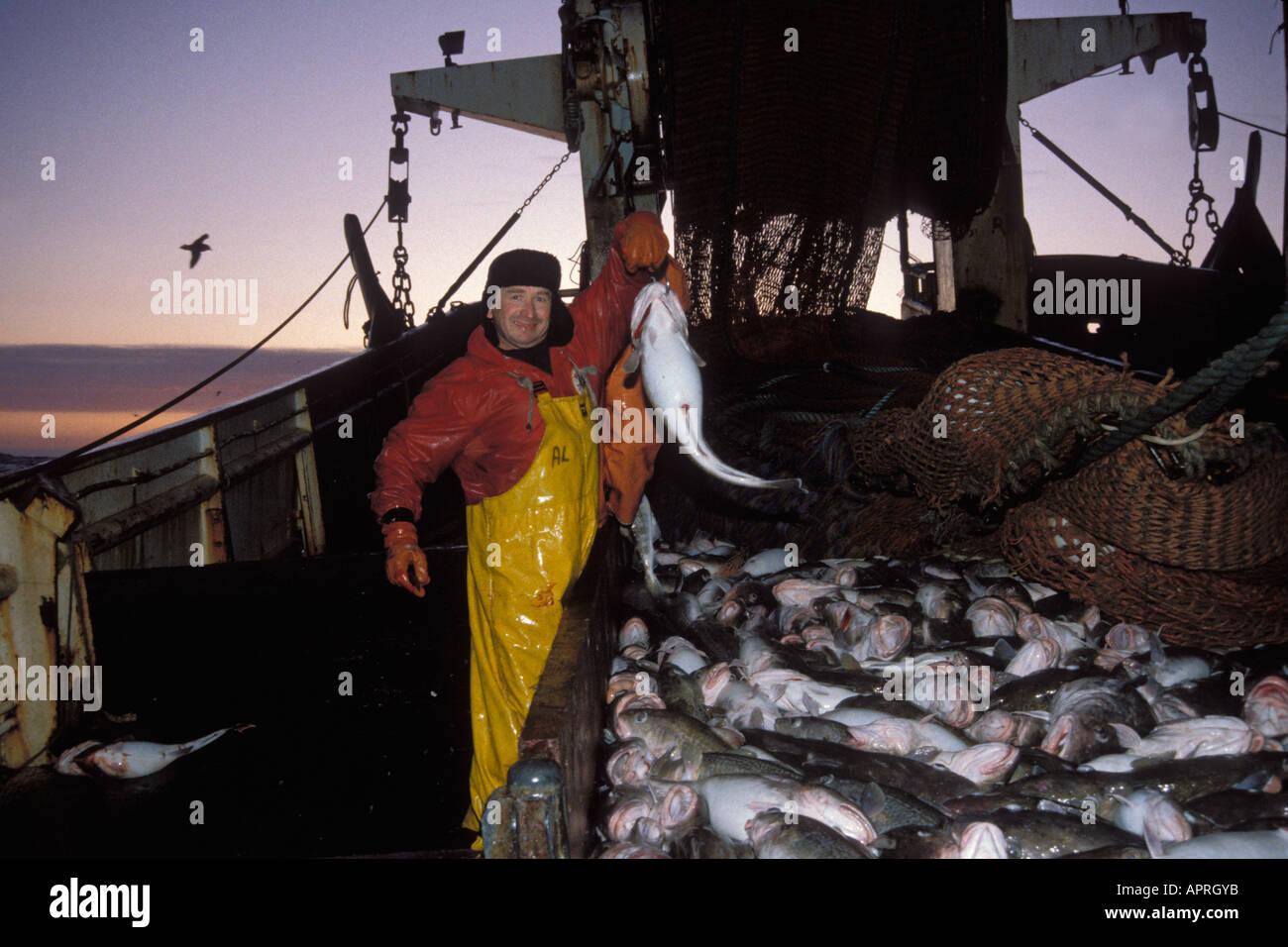 Pesca comercial trabalhador sangra do pac fico bacalhau for Pacifico fish company