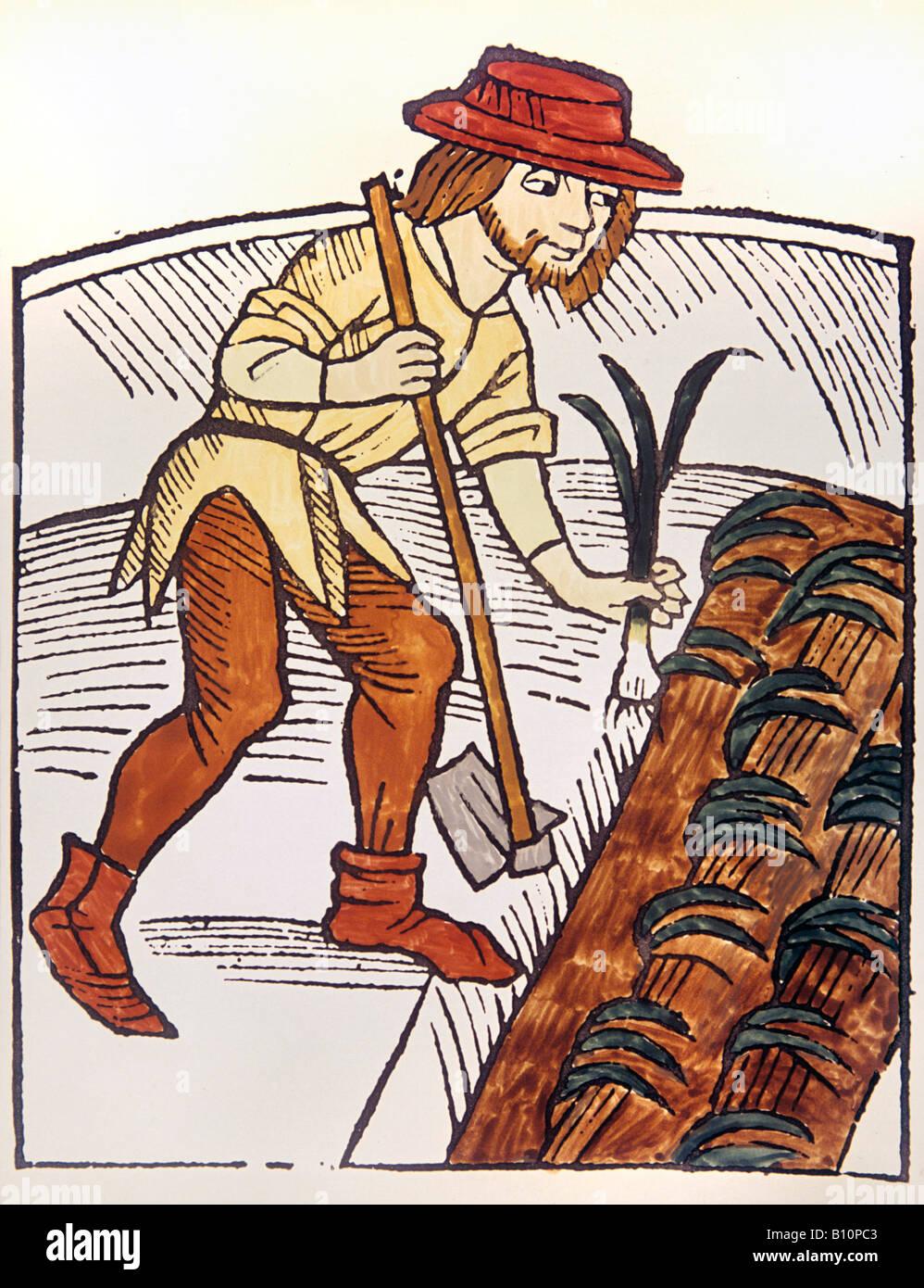 Plantio de alhos franceses xv c xilogravura Medieval autor AAAC Ltd Imagens de Stock