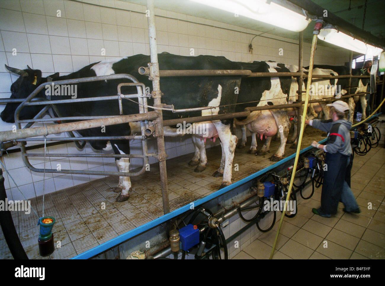 Milking Cow Milking Plant Fotos Milking Cow Milking Plant Imagens  -> Planta De Sala De Ordenha