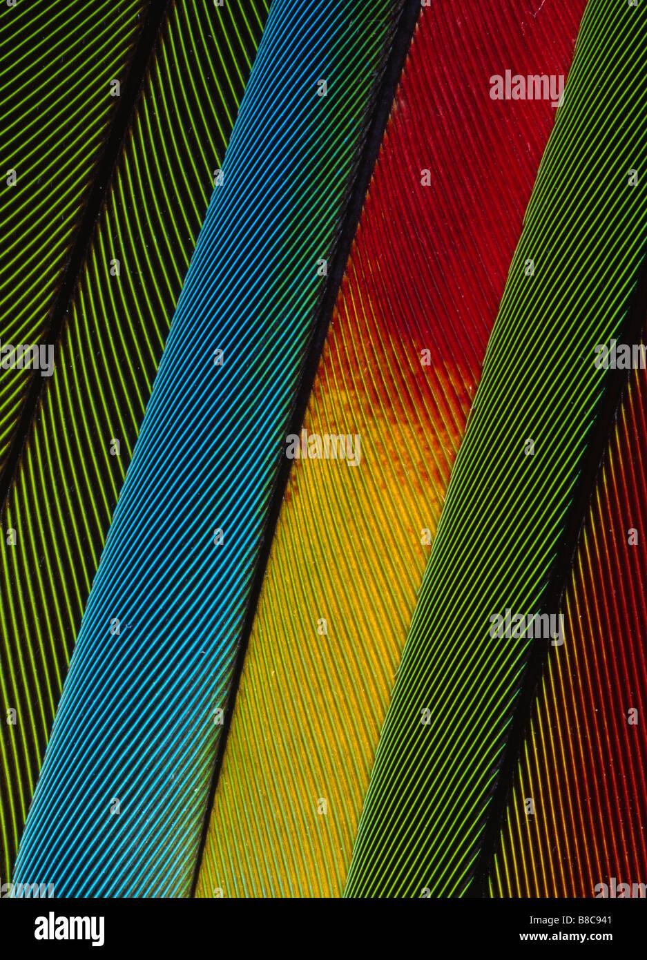PENAS DE PAPAGAIO Imagens de Stock