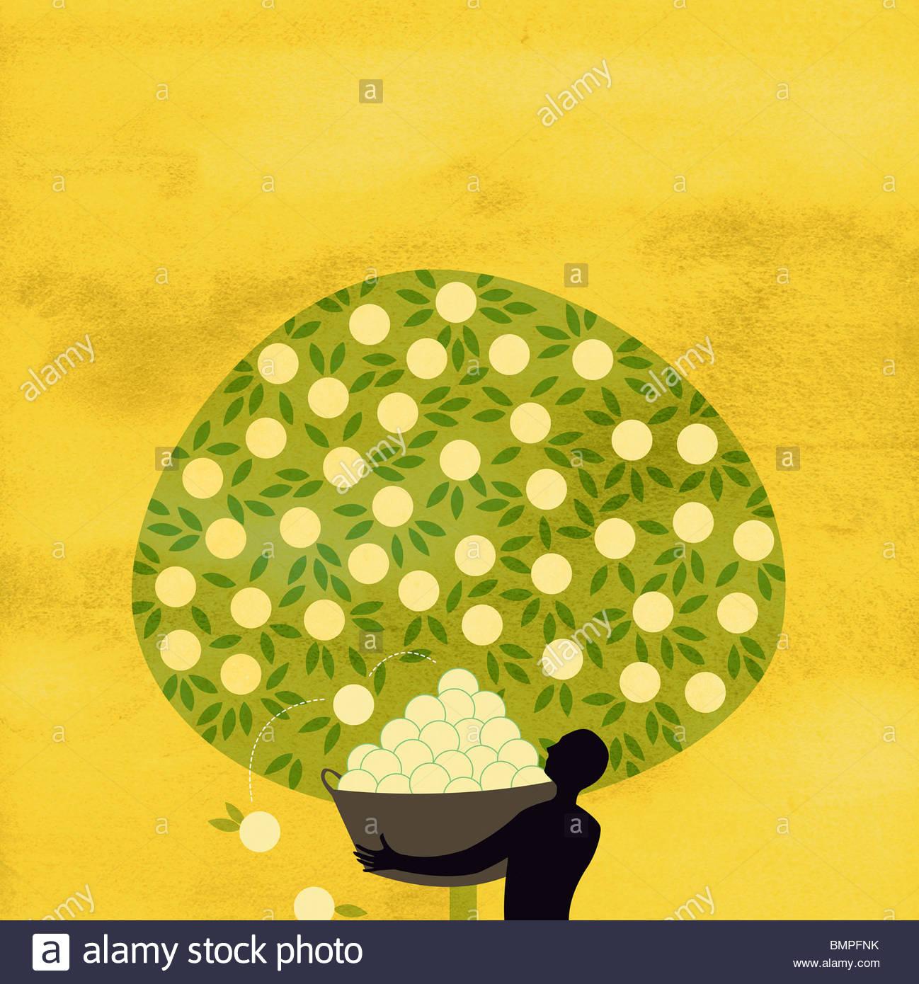 A colheita de frutos de homem árvore abundante Imagens de Stock
