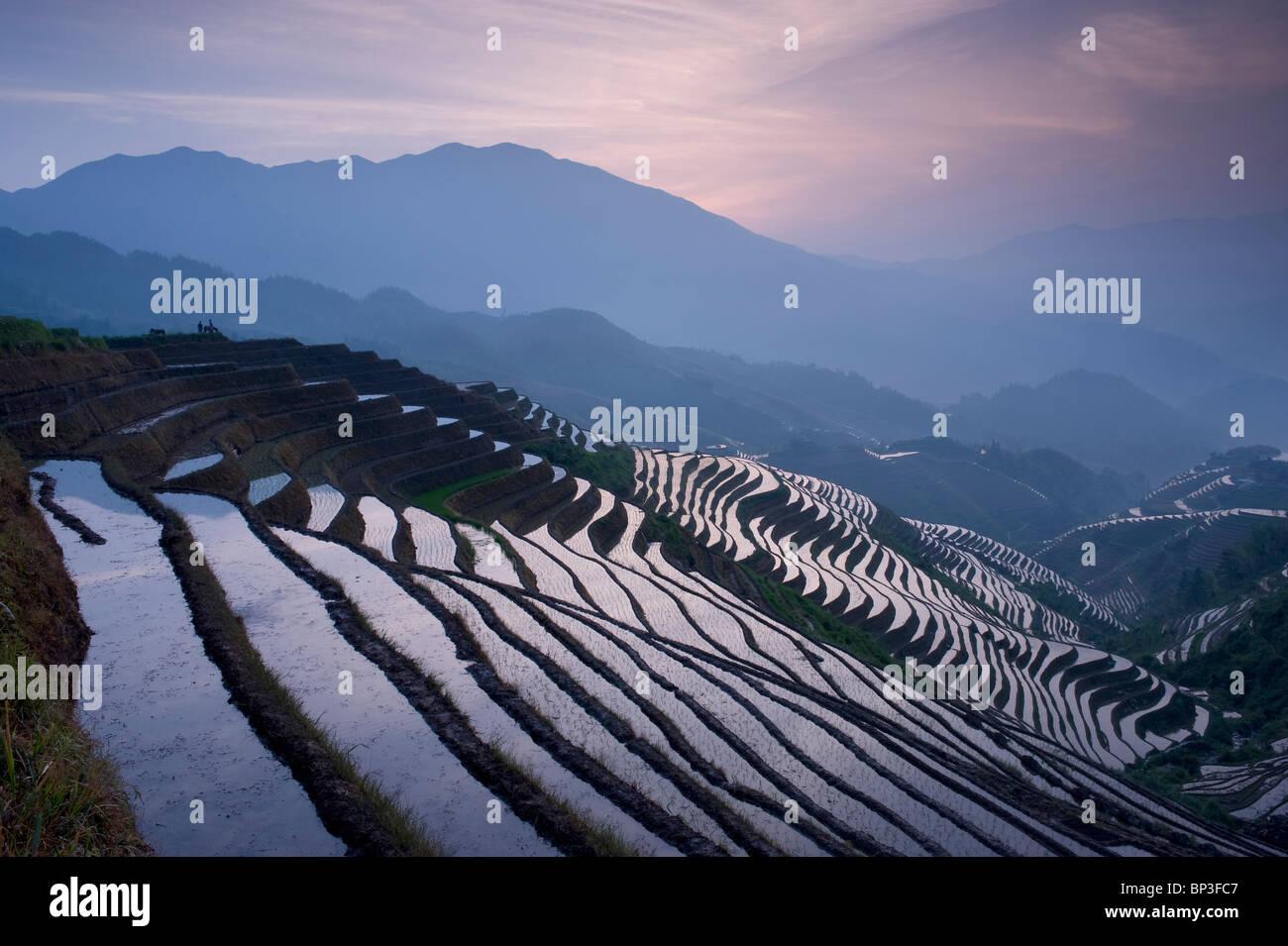O pôr do sol no backbone do Dragão terraços de arroz perto da aldeia de Dazhai Yao, Guangxi Província Imagens de Stock