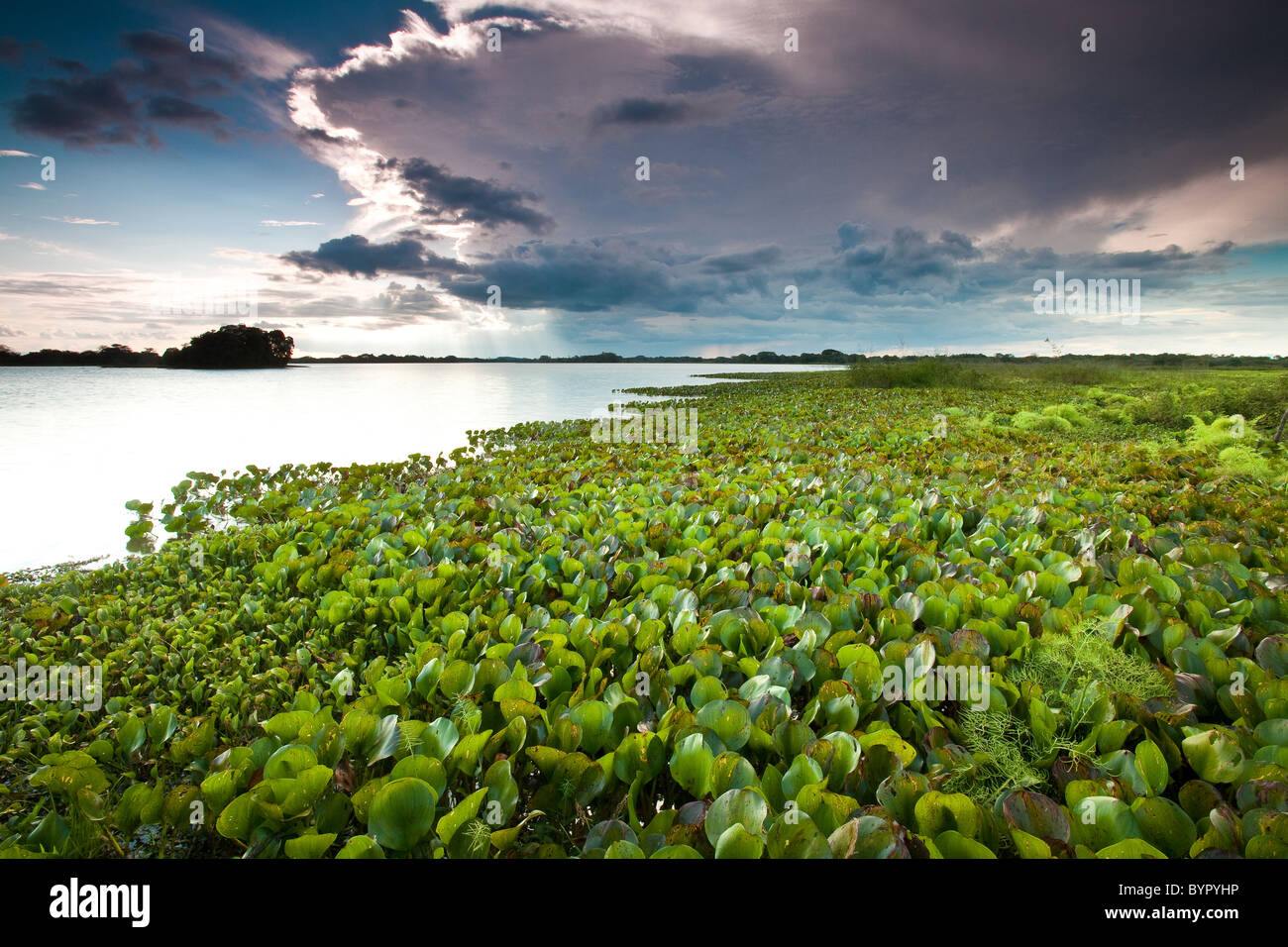 Junto ao lago de Refugio de vida silvestre Cienaga de las Macanas natureza reserva, na província de Herrera, Imagens de Stock