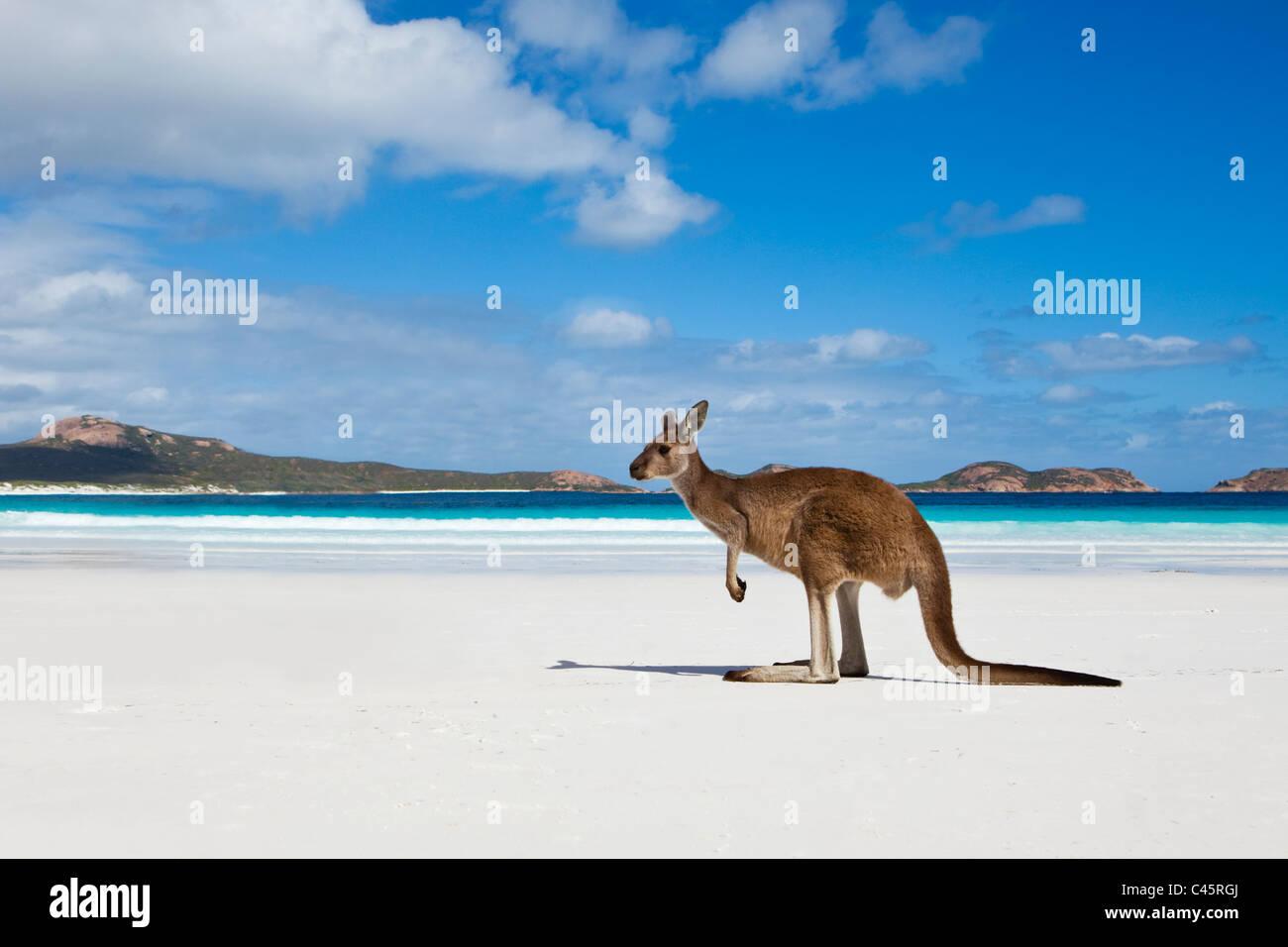 Método canguru na praia na Baía de sorte. Cape Le Grand National Park, Esperance, Western Australia, Austrália Imagens de Stock