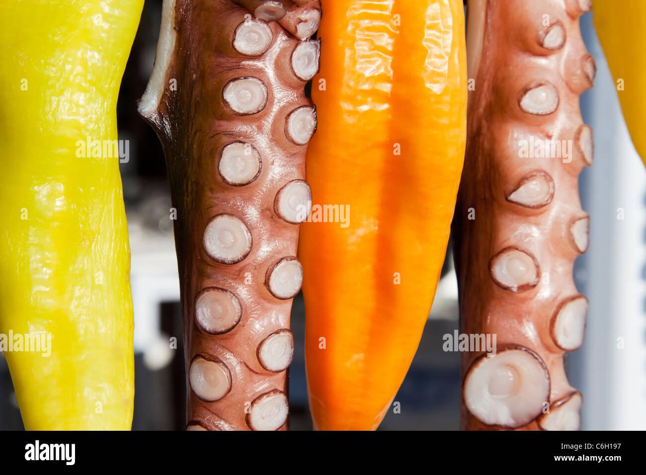 Polvo (ohtapodi) secagem fora de um restaurante em Fira, Santorini (Thira), ilhas Cíclades, Mar Egeu, Grécia, Imagens de Stock