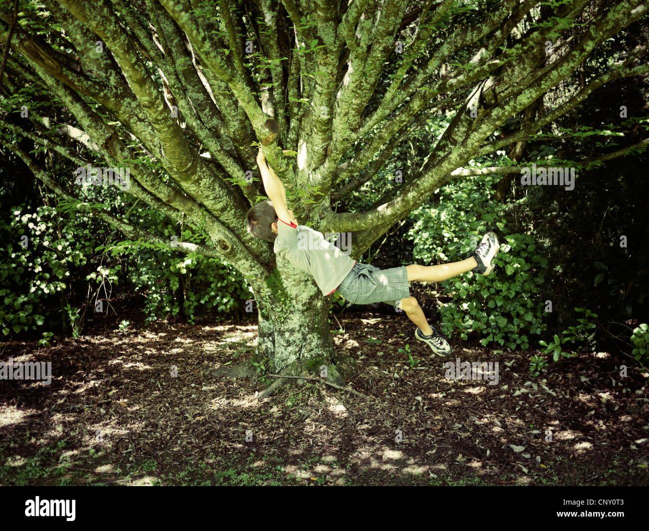 Boy baloiços ramo de árvore. Imagens de Stock