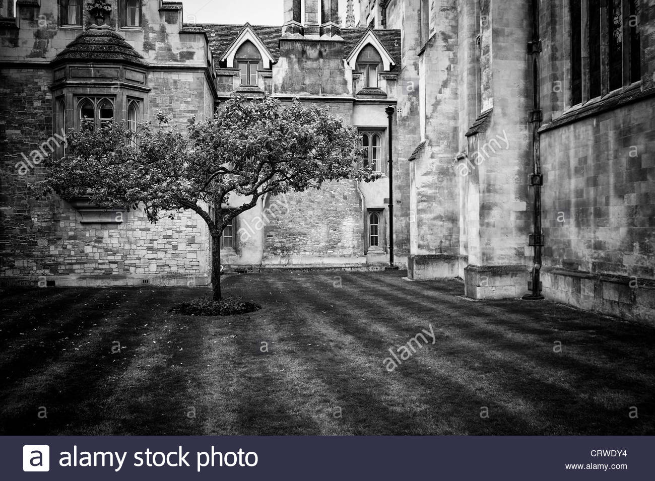 Sir isaac newton apple tree cambridge em preto e branco foto imagem sir isaac newton apple tree cambridge em preto e branco thecheapjerseys