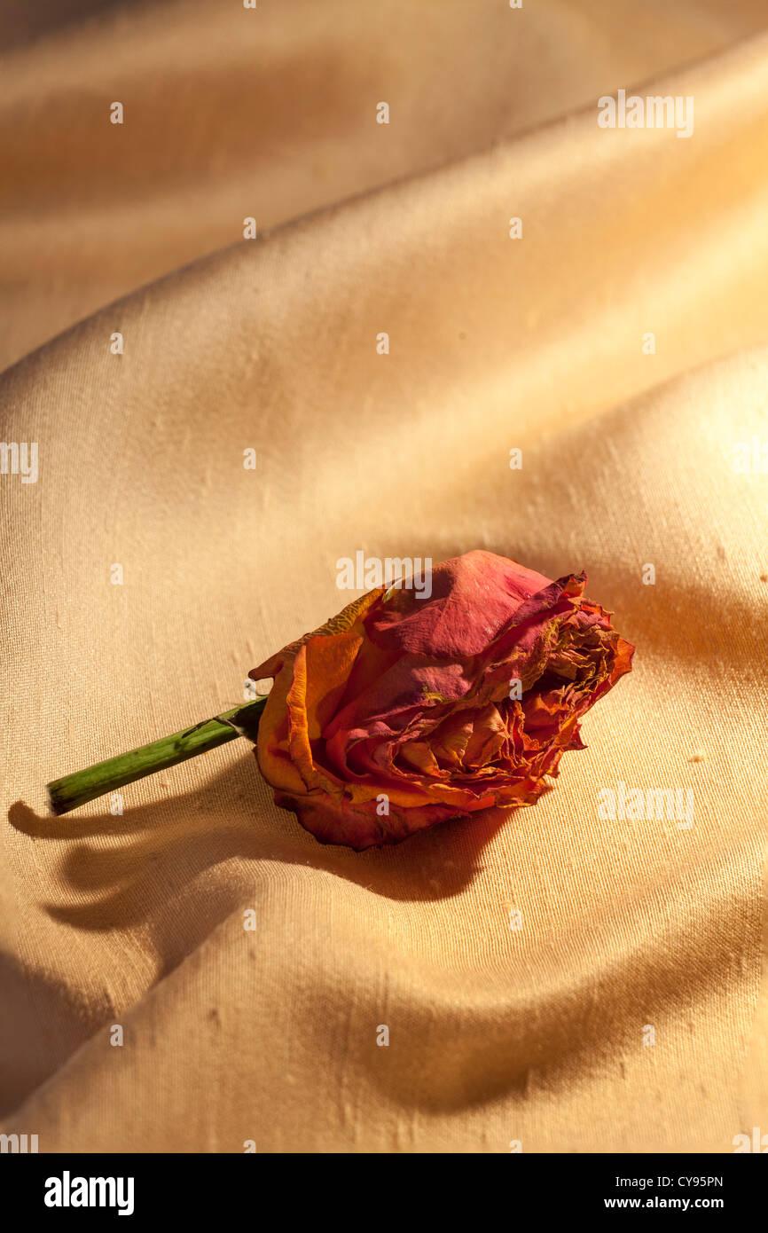Resultado de imagem para rosa murcha