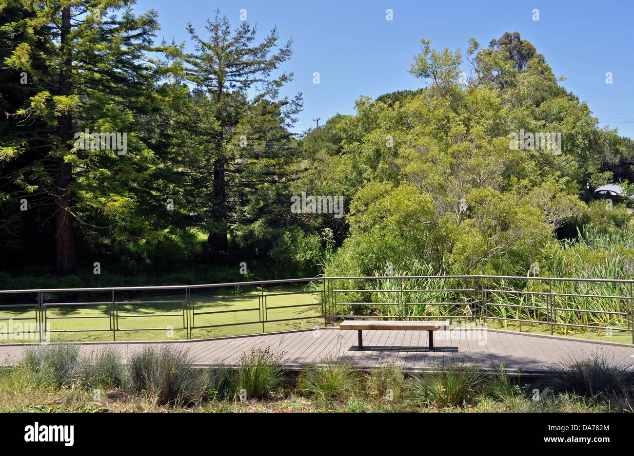 Lovely Área De Recursos Naturais Significativas Habitat, McLaren Park, San  Francisco, California, ESTADOS UNIDOS DA AMÉRICA