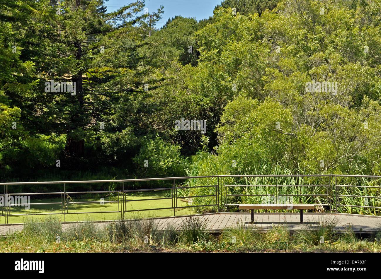 Área De Recursos Naturais Significativas Habitat, McLaren Park, San  Francisco, California, ESTADOS UNIDOS DA AMÉRICA