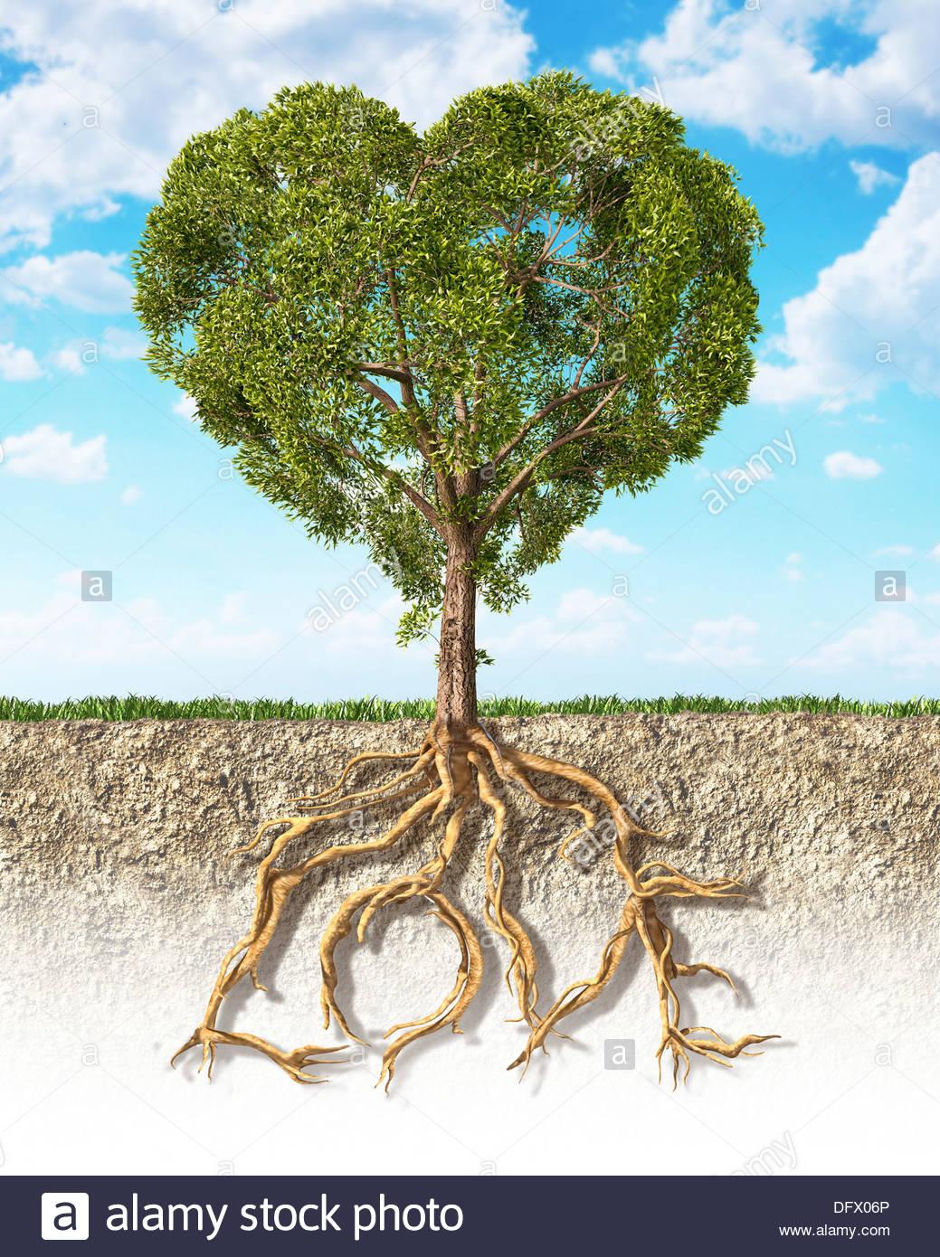 Secção transversal do solo mostrando uma árvore em forma de coração com as suas raízes Imagens de Stock
