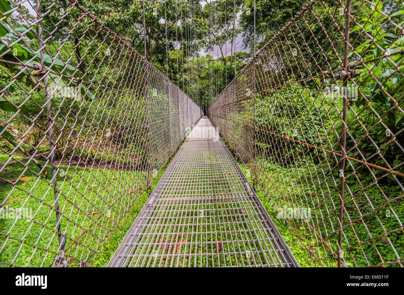Costa Rica, Junge, suspension bridge Imagens de Stock
