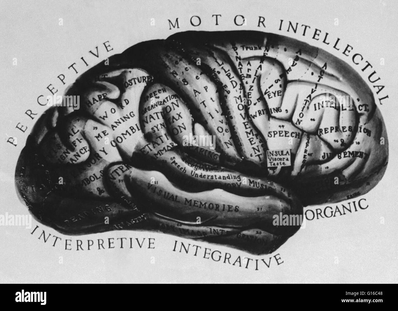 Um histórico do cérebro ilustração anatômica com as partes marcadas ...