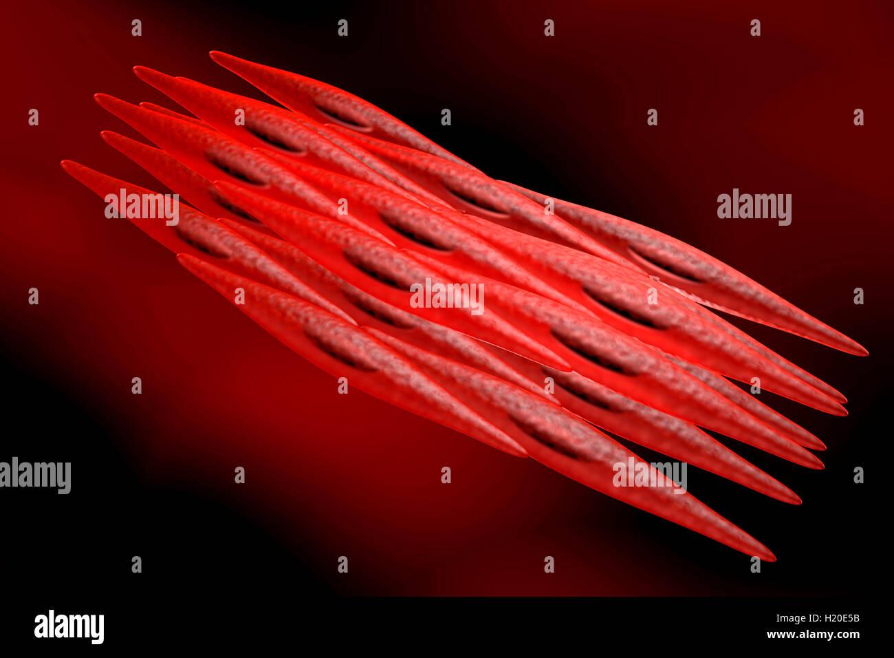 3D renderizada ilustração de um não-estriados miócito, célula ...