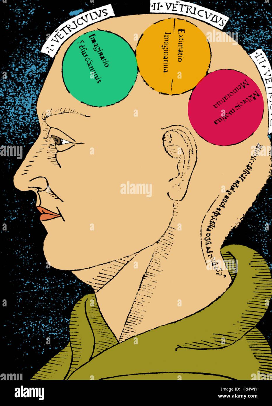 As funções do cérebro, Albertus Magnus xilogravura Imagens de Stock