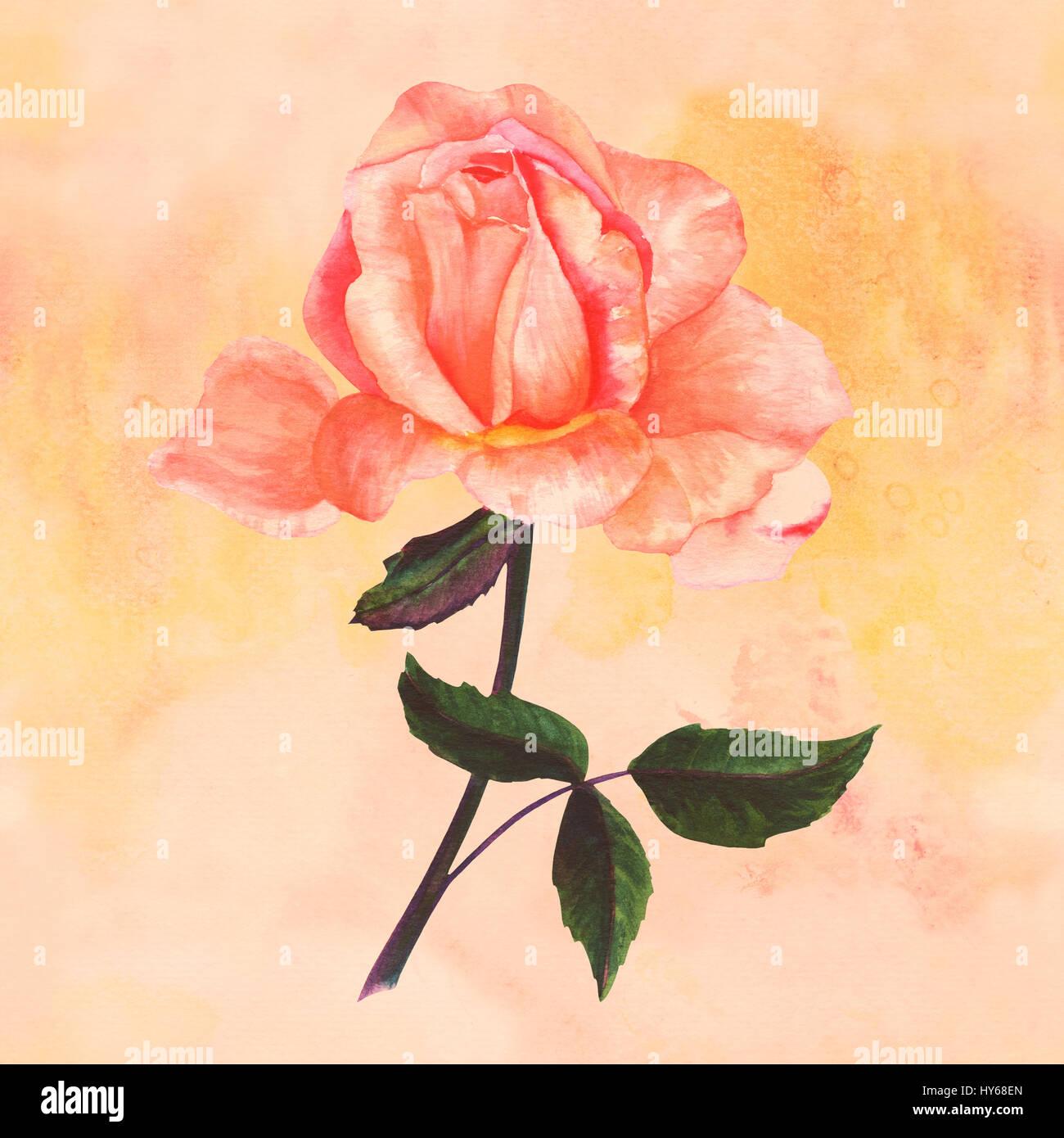 um desenho em aquarela de um concurso rosa flor pintados à mão no