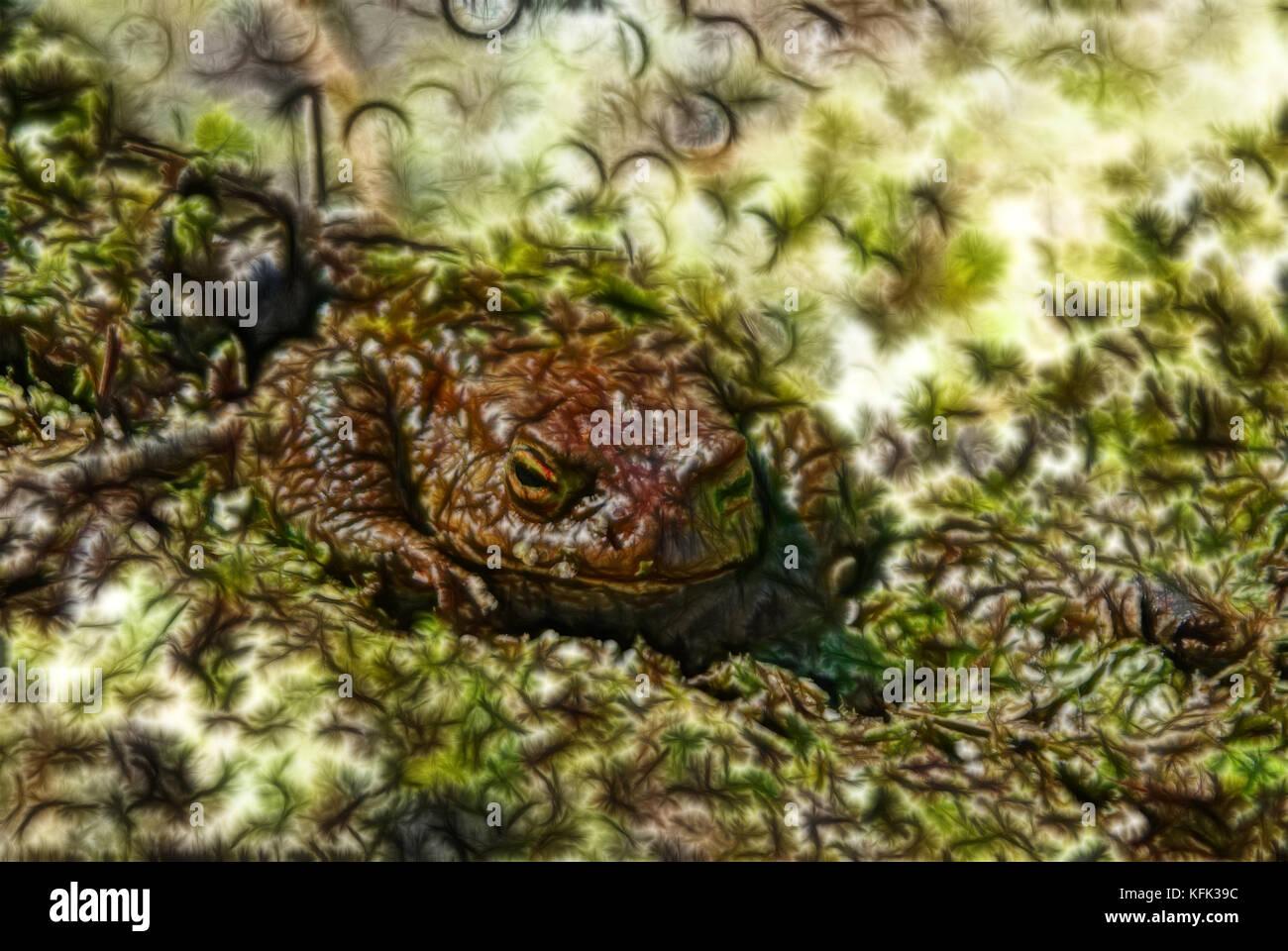 resumo luz fractal background generalização imagens da natureza
