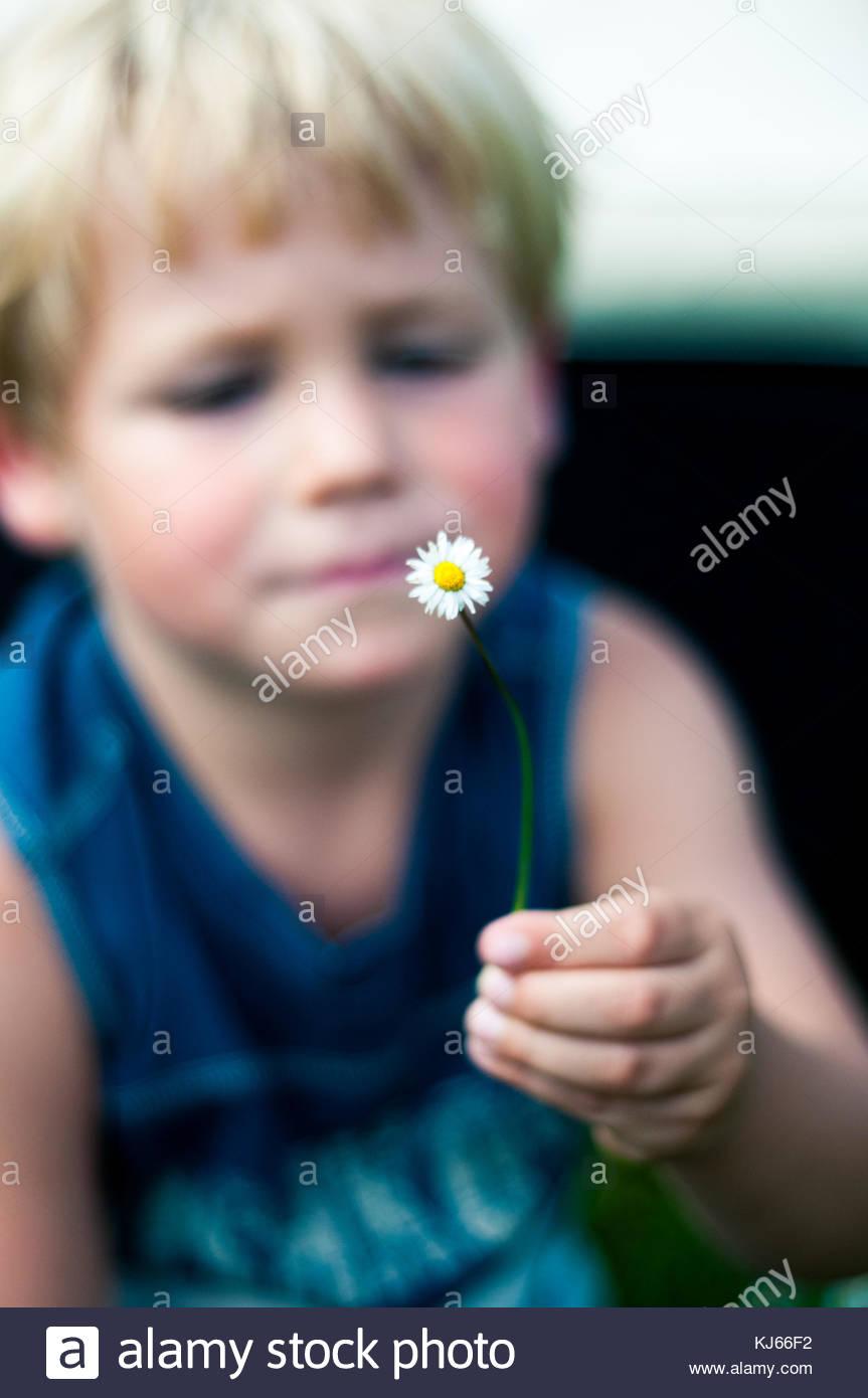 Exploração Infantil daisy Imagens de Stock