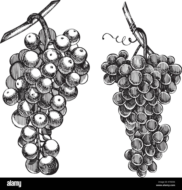conjunto de uvas desenho monocromático mão de cachos de uva