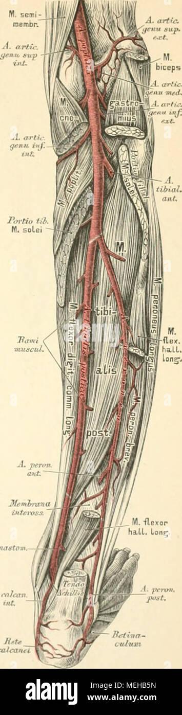 Fantastisch Crashkurs Anatomie Und Physiologie Notizen ...