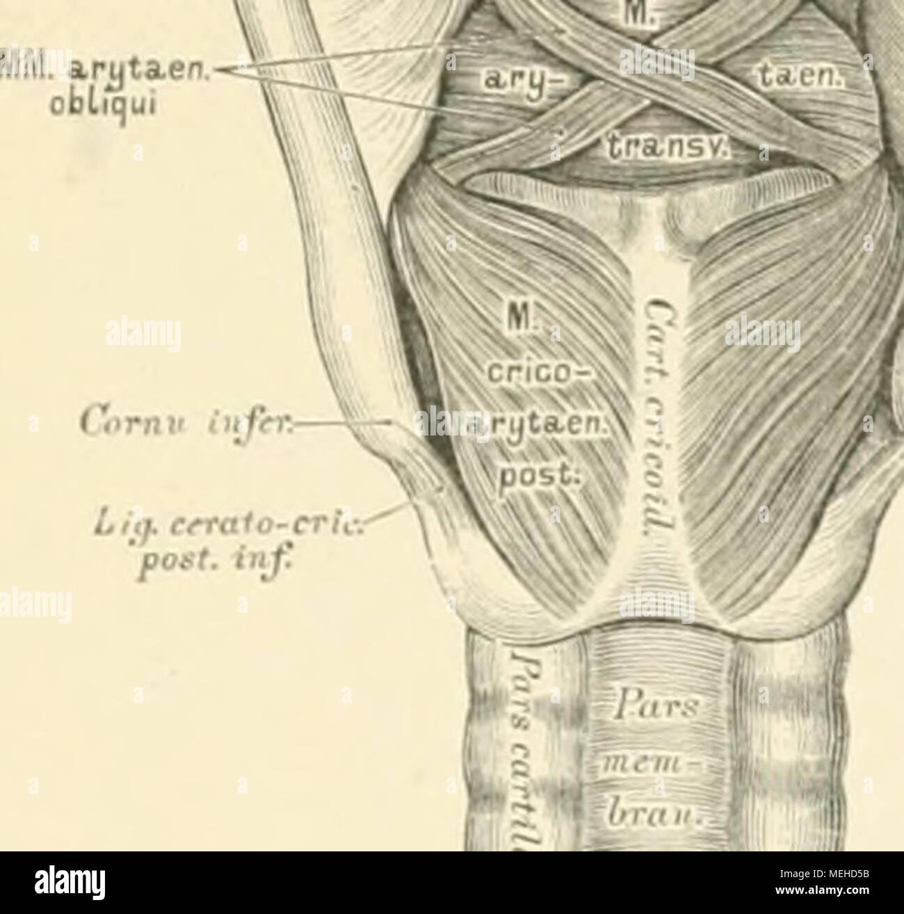 Topographische descritivo und die Anatomie des Menschen . \