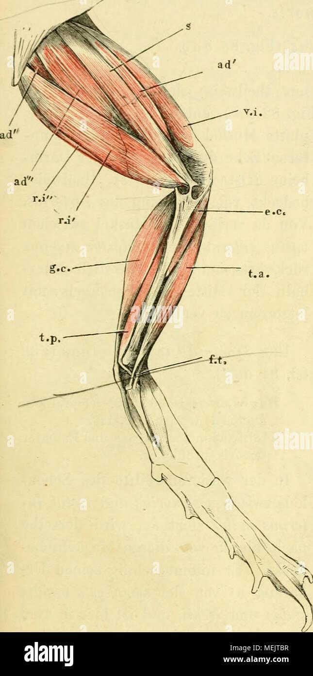 Fantastisch Bauch Quadranten Anatomie Galerie - Anatomie von ...