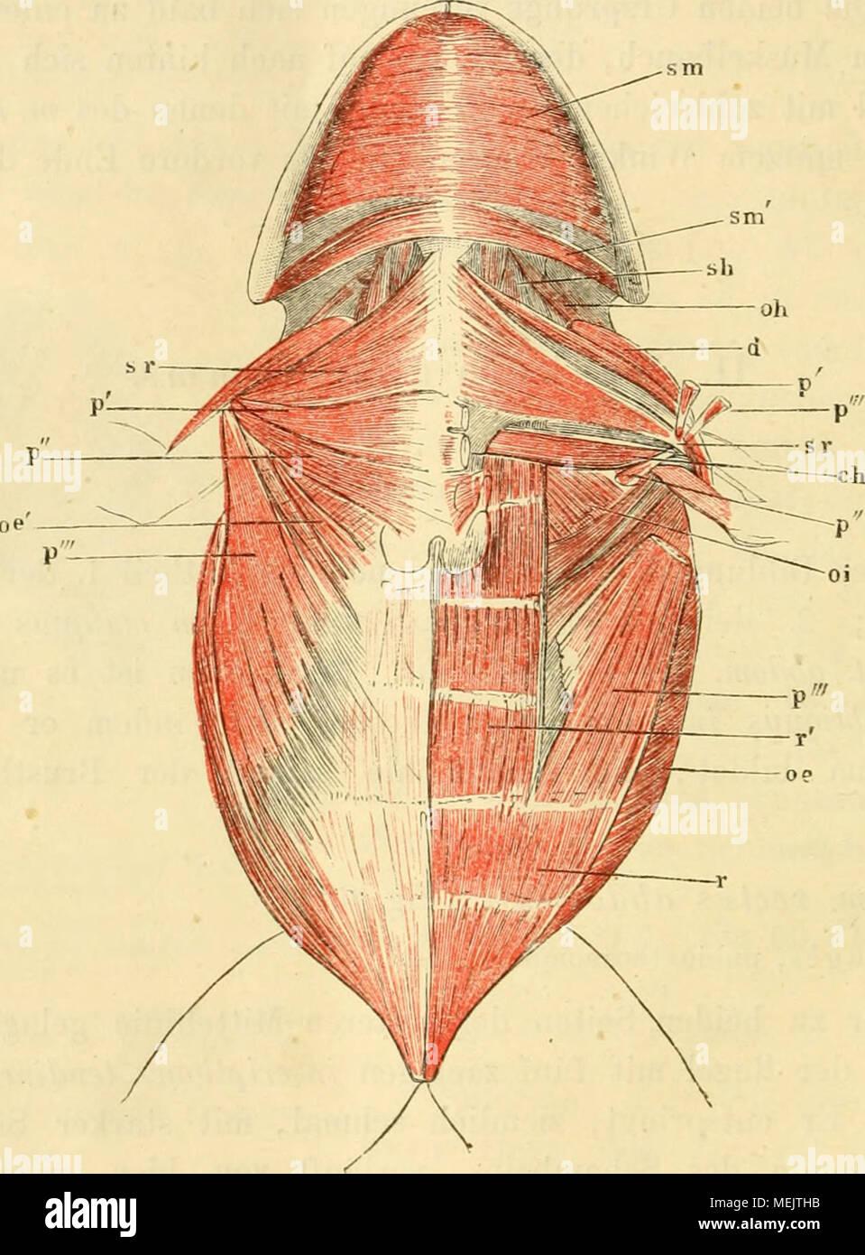 Charmant Anatomie Und Physiologie 2 Galerie - Menschliche Anatomie ...