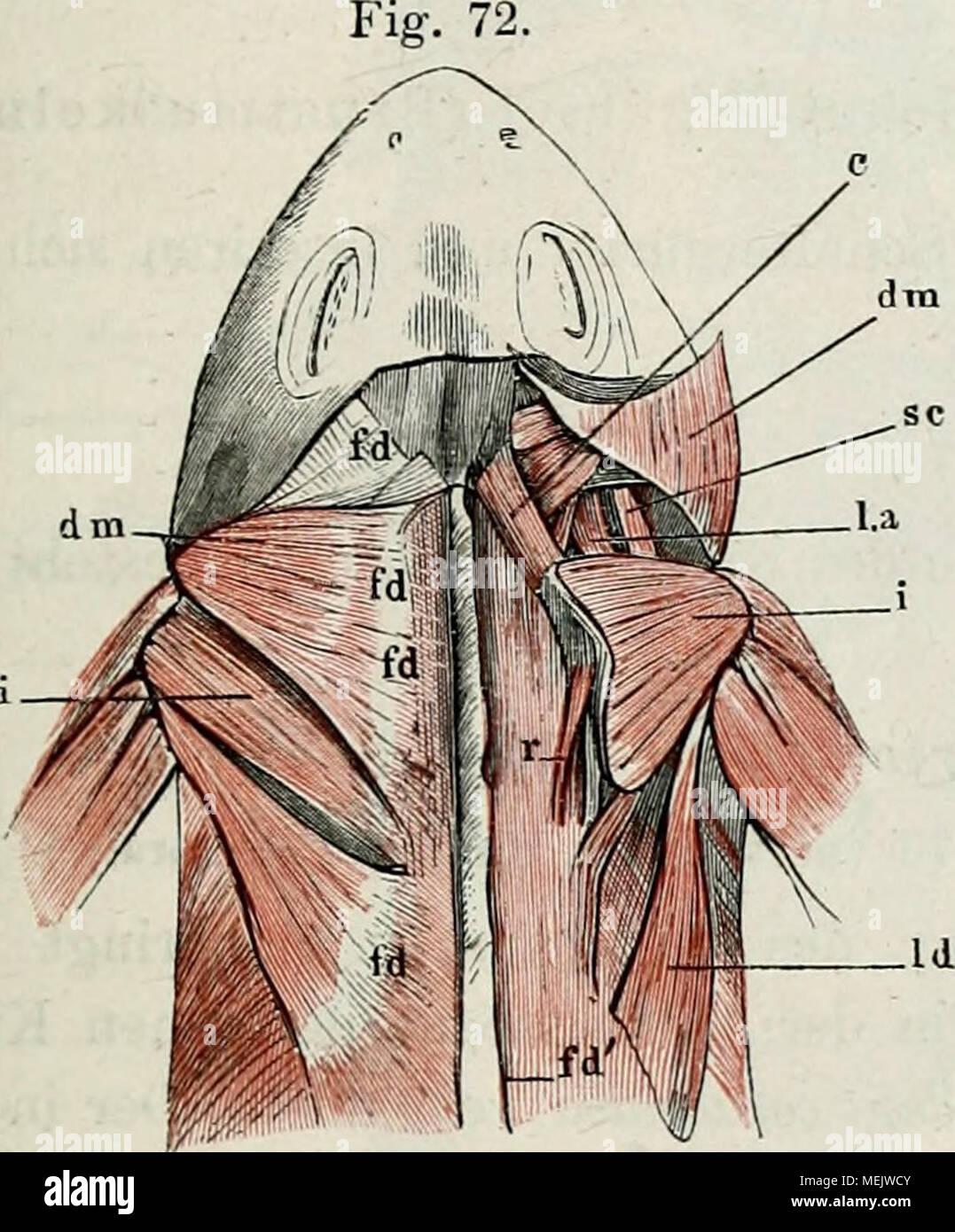 Großartig Diagramm Der Muskeln Im Rücken Ideen - Menschliche ...