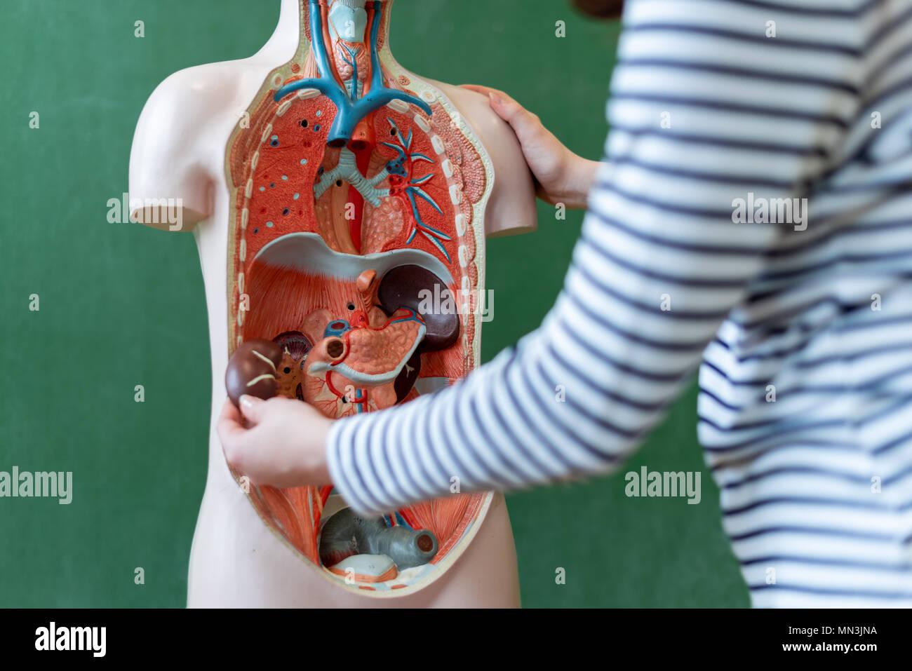Asombroso Maneras Divertidas De Aprender La Anatomía Festooning ...