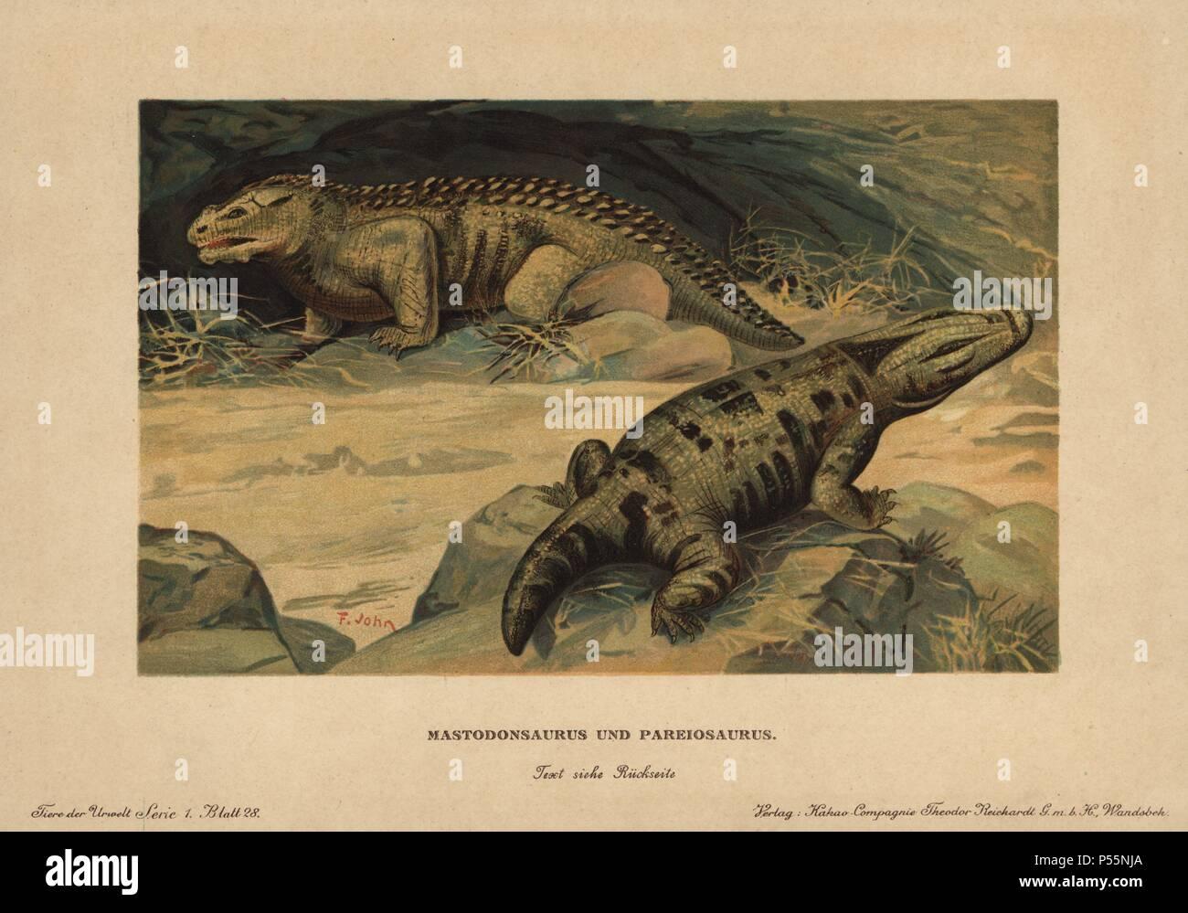 Mastodonsaurus, extinct genus of giant large-headed