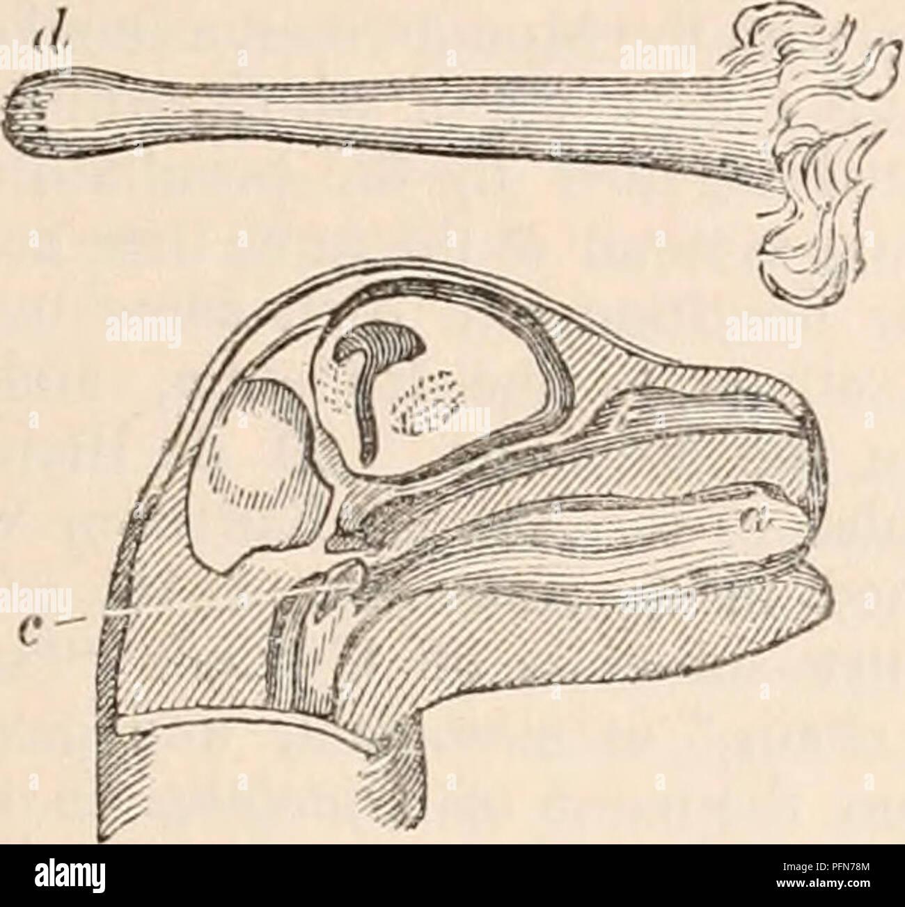 A cyclopaedia de anatomia e fisiologia. Anatomia; fisiologia ...