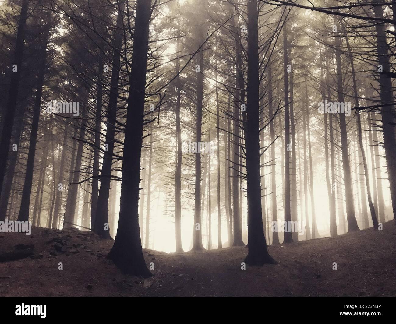Macclesfield floresta Imagens de Stock