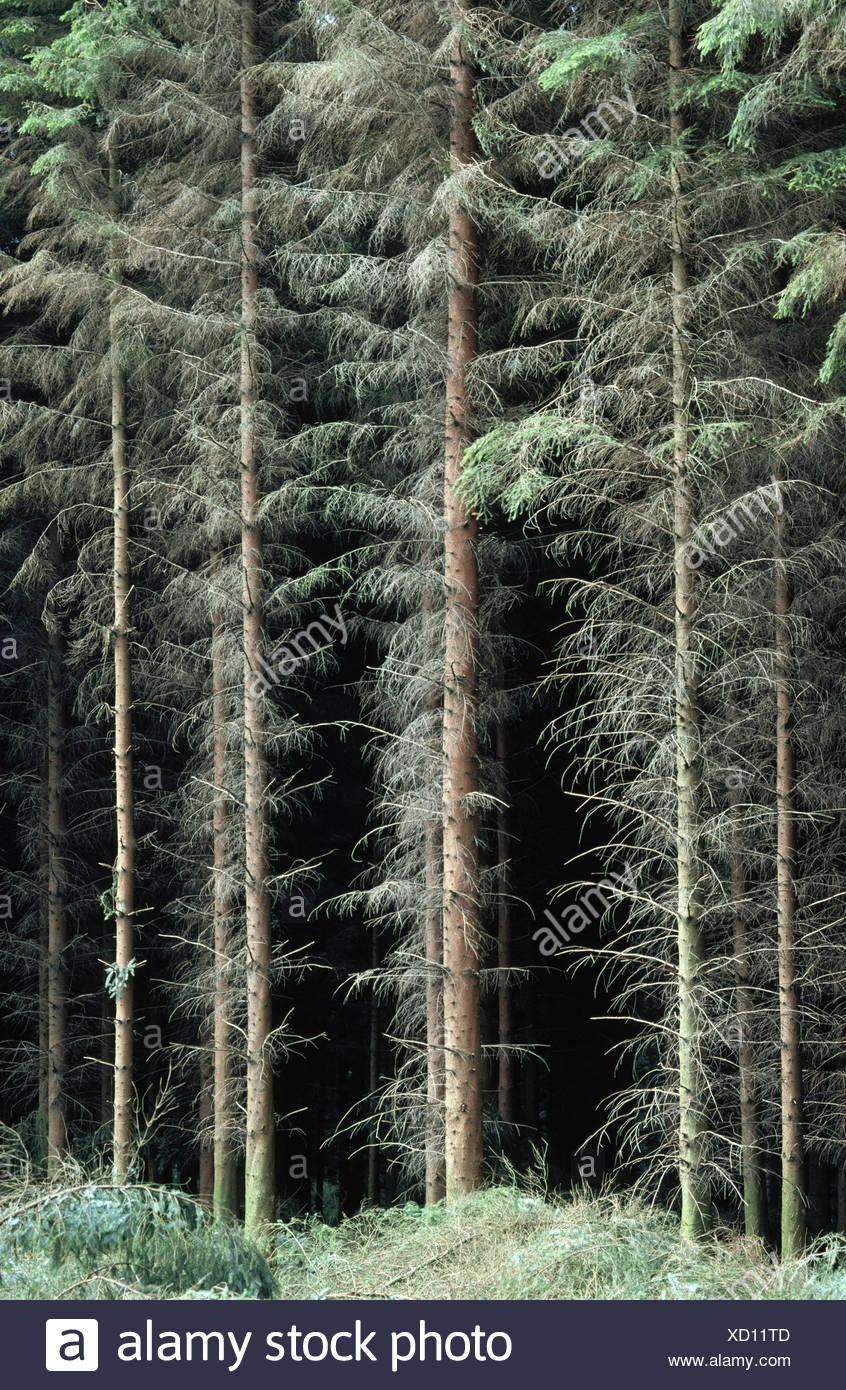 Douglas Fir Plantation Fotos & Douglas Fir Plantation Imagens de ...
