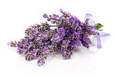 bunch-of-lavender-flowers-on-white-backg