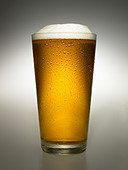 close-up-of-glass-of-beer-C7JRFE.jpg