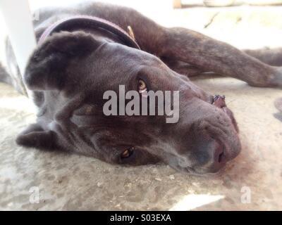 Dog face closeup - Stock Image