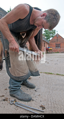 Male man Farrier working on hoof of horse to clean trim and file in stable yard of Oak Farm Alrewas Staffordshire - Stock Image