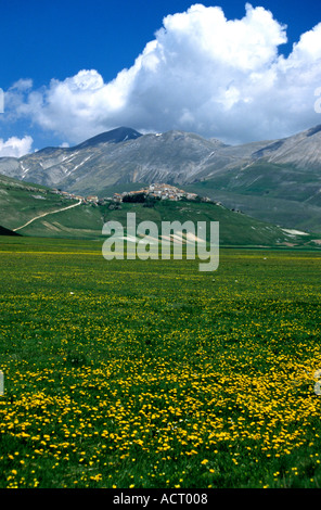 Lentil fields of the Piano Grande below Castelluccio where best lentils in Italy are grown and wildflowers bloom - Stock Image