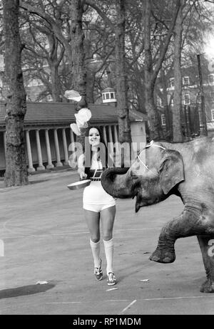 Strange tales of London. Beauty Queens (who will be in the pancake race on Tuesday) and baby elephant Minoti - she is five, but for an elephant that is a baby. February 1975 75-00776-009 - Stock Image