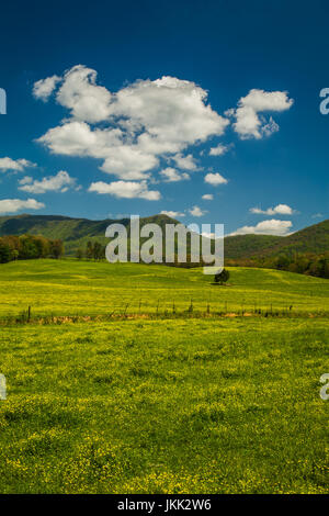 Spring in the English Mtn Area, Sevier County - Stock Image