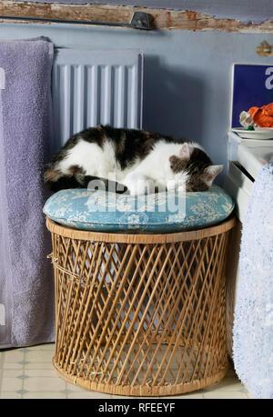 cat sleeping on blue cushion on top of wicker stool in bathroom - Stock Image