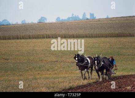 Horse Ploughing, Somerset 1985 - Stock Image
