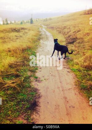 Dog on trail - Stock Image