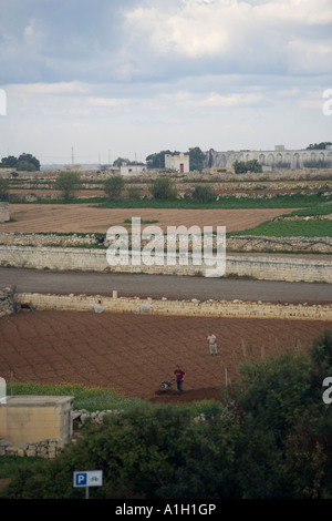 cultivation - Stock Image
