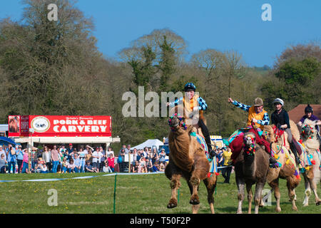 Hungerford, West Berkshire, UK. 19th Apr 2019. Melbourne 10 Racing Camel Racing in the main area thrilling the crowds with AP McCoy (Sir Anthony Peter McCoy OBE, commonly known as AP McCoy ) former champion horse racing jockey taking the the lead and onto win the race over famous horse race trainer Jamie Osborne and Nico de Boinville racing jockey who competes in National Hunt racing. - Stock Image