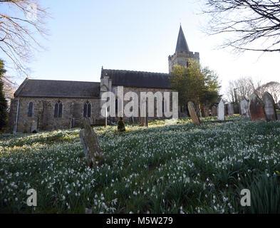 Naturalised snowdrops (Galanthus nivalis) cover the graveyard at St Mary's Church in Lamberhurst. Lamberhurst, Kent, - Stock Image