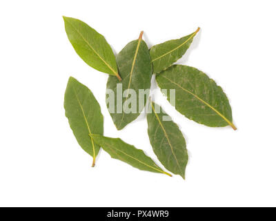 a selection of bay leaves on a white background - Stock Image
